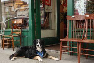 Hund vorm Geschäft