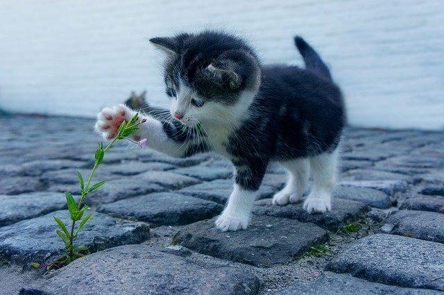 Katzen lieben das Spielen auch mit Pflanzen